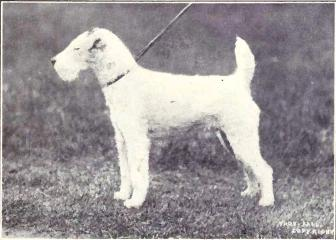 Fox_Terrier_(wire-hair)_from_1915